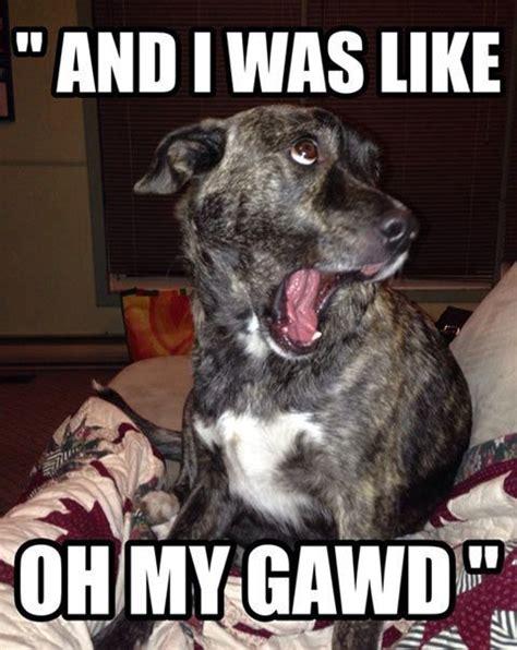 Joking Dog Meme - funny dog crazy humor memes pinterest