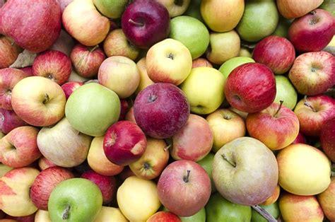 apple dismisses diversity to shake up board of