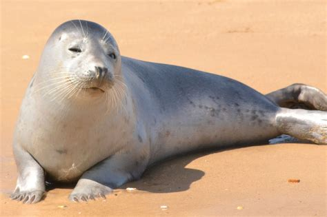 pictures of seal of approval free stock photo domain pictures