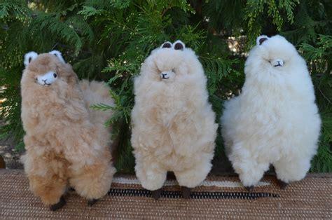 Standing Alpaca   KT Lee Ranch Alpacas