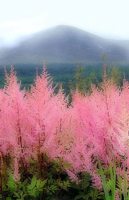 17 best images about pink trees on pinterest christmas