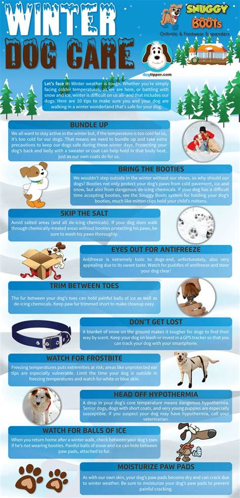 dogs in care best 25 care tips ideas on care puppy care and pet care