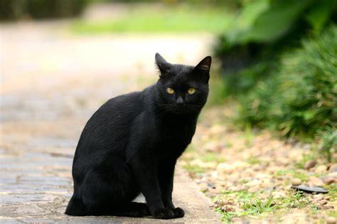 persone portano sfiga gatto nero day il loro giorno per dimostrare non