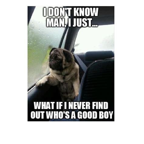 Pet Memes - 533 best animal humor images on pinterest funny stuff