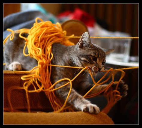 Cat String - 14 fantastic pictures of cats with string