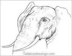 Big 5 Sketches by Image Result For The Big 5 Animal Outlines Sketches In