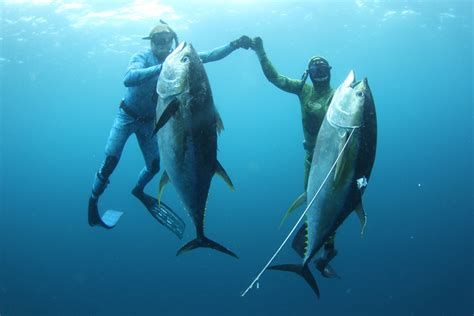 fishing with spear spearfishing panama page 2