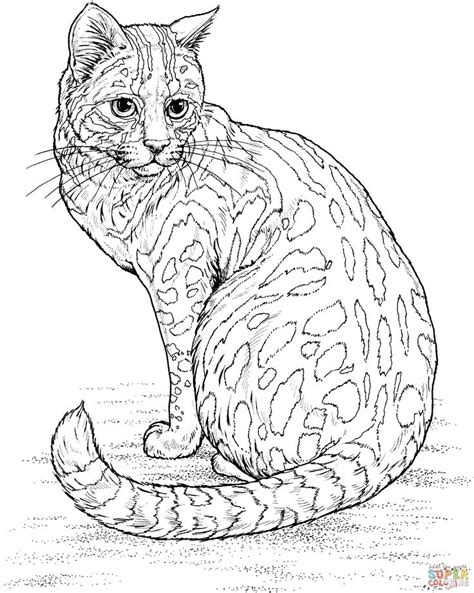 cat for adults cat coloring pages for adults search coloring