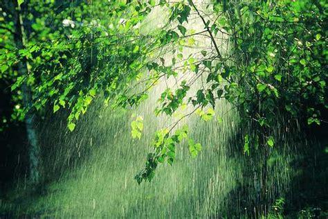 imagenes de otoño y lluvia sendero