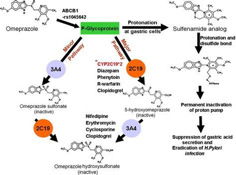 Obat Warfarin clopidogrel and proton inhibitors jacc