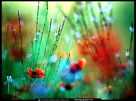 flower wallpaper national geographic national geographic wallpaper flowers wallpapersafari