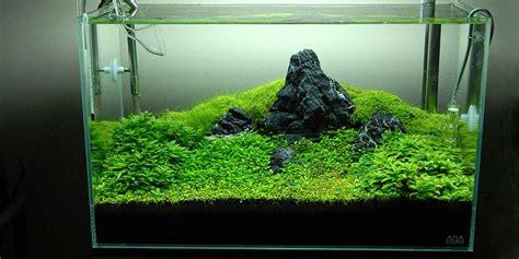 design untuk aquascape japanese style aquascape c aquascape