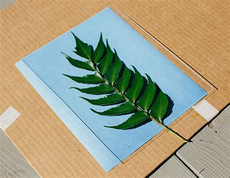 How To Make Photosensitive Paper - how to make sun prints a great science and activity