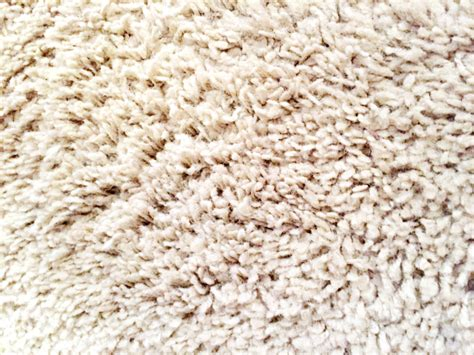 how to remove stains from wool rug tea stains from wool carpet carpet the honoroak