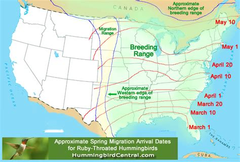 2016 hummingbird spring migration map 2016 hummingbird
