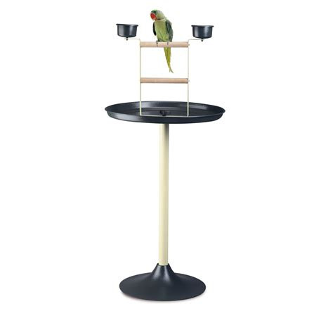 imac vogue parrot stand dogspot online pet supply store
