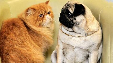 Cutest Cats Pet Pet Pet Product 8 by And Cutest Cats Annoying Dogs Compilation Try Not