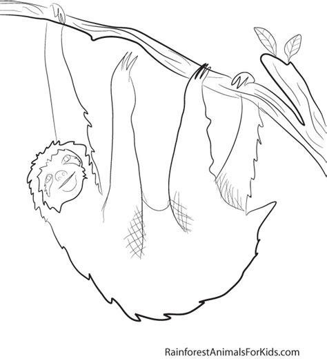jungle insects coloring pages printable coloring pages of rainforest animals