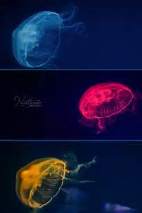 colorful jellyfish colorful jellyfish by nittaaaa on deviantart