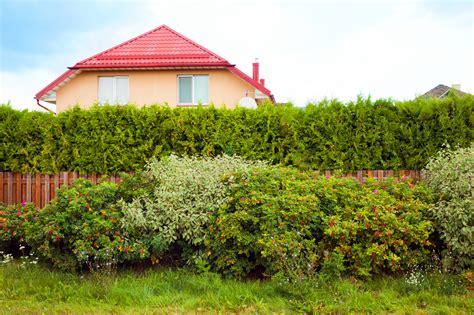 Garten Sichtschutz Pflanzen Schnellwachsend by Schnellwachsende Str 228 Ucher Und Hecken Als Sichtschutz