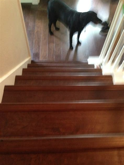 Bull nose hardwood pieces on stairs, raised or flush?