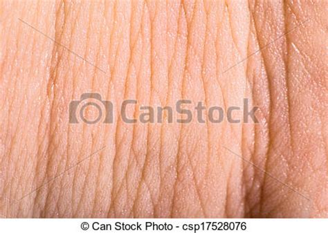 up human skin macro epidermis stock photo image of anatomy freckles 36429390 picture of up human skin macro epidermis texture csp17528076 search stock photography