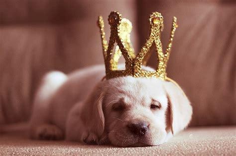 princess puppy princess puppy the luxury spot