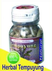 Obat Herbal Tempuyung disentri obat herbal berkhasiat untuk sehat