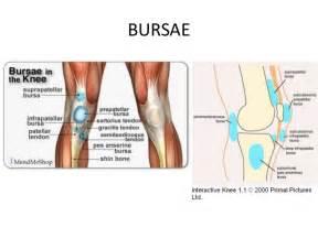 Knee anatomy knee joint anatomy