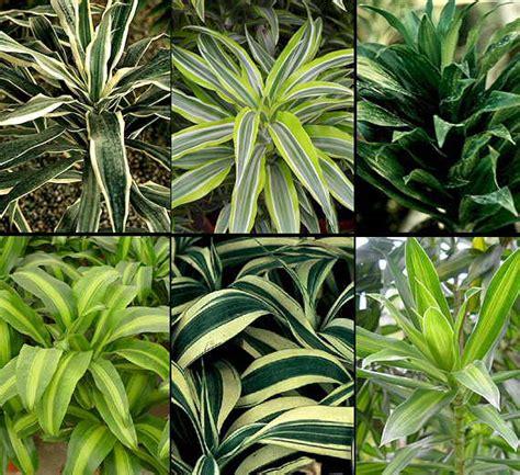 imagenes de plantas verdes de interior jardines 187 plantas de interior fotos
