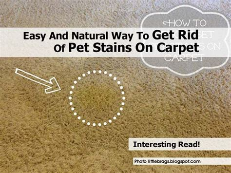 How To Get Urine Stain Out Of A Mattress by How To Get Dried Urine Stain Out Of Carpet