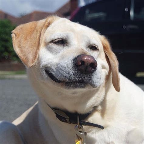 derpy puppy 18 insanely goofy dogs from the best new instagram account photos