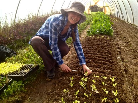 A muster of market gardeners    Milkwood: permaculture
