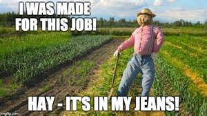 Hay Meme - scarecrow imgflip
