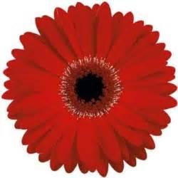Red Gerbera Daisy Gerbera Daisy Red