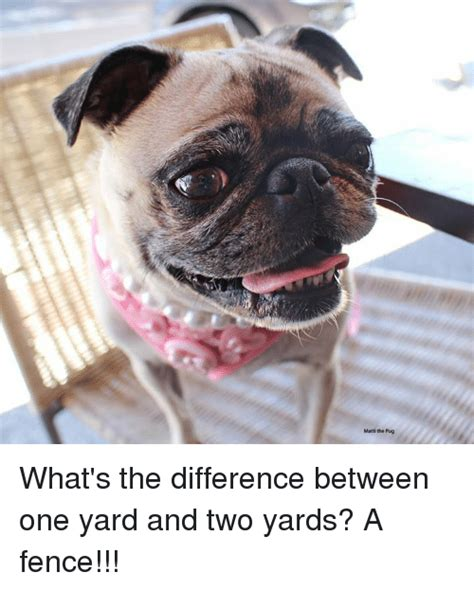 difference between and pugs 25 best memes about pugs pugs memes