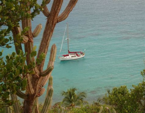 kekoa the misunderstood mongoose books about st usvi travel information island activities