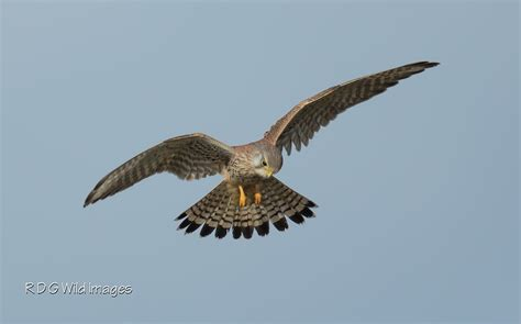 ls with birds on them northtonshire birding sunday s birds