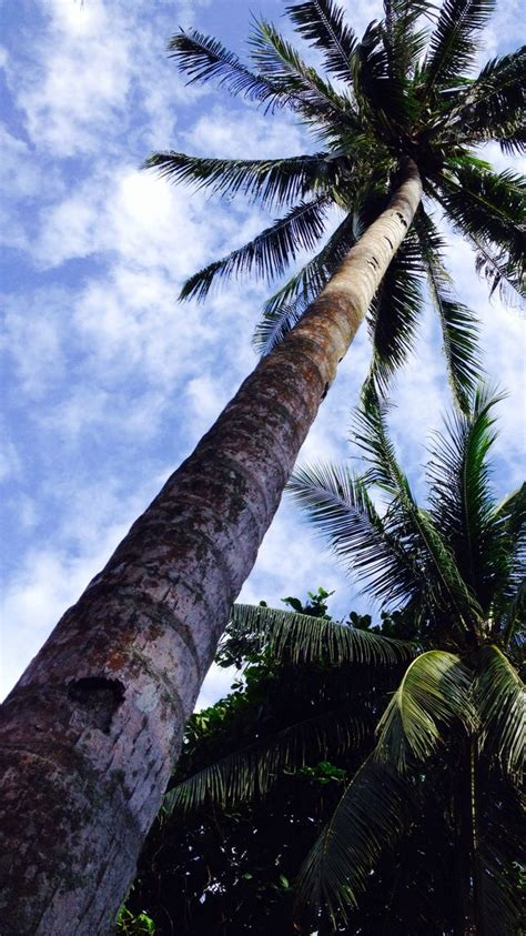 summer vibes palm trees hd 202 best palm trees images on pinterest palm trees