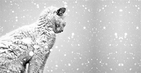 imagen blanco y negro en indesign 20 fotograf 237 as en blanco y negro que te dejar 225 n sin aliento