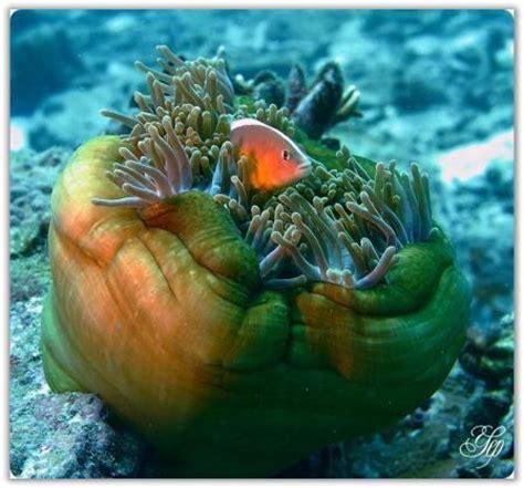 gambar wallpaper alam bawah laut nieluch yuritzha d thaouruz pemandangan alam laut
