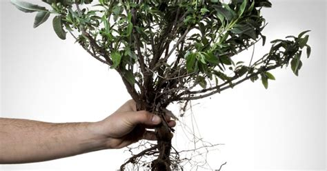 how to kill roots chemicals that kill tree roots ehow uk