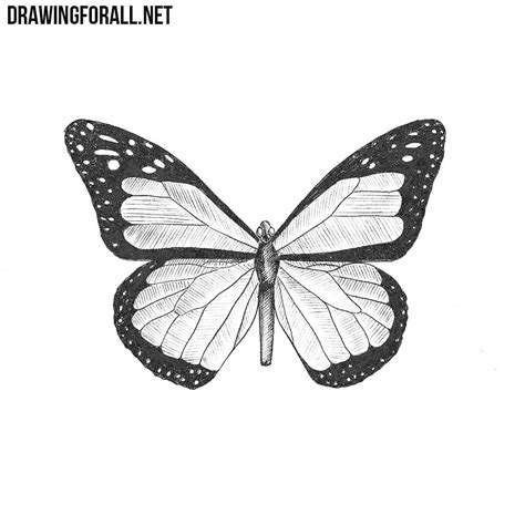 How To Draw A Drawingforall by How To Draw A Butterfly Drawingforall Net