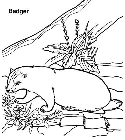 free animal badger coloring sheet