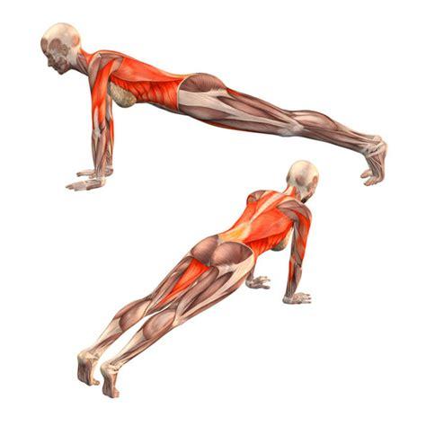 boat pose muscles used plank pose dandasana yoga poses yoga yoga