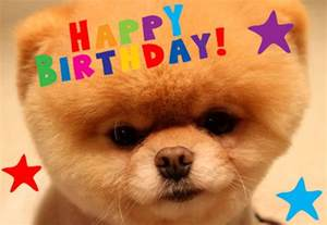 happy birthday boo world s cutest dog s most adorable photos