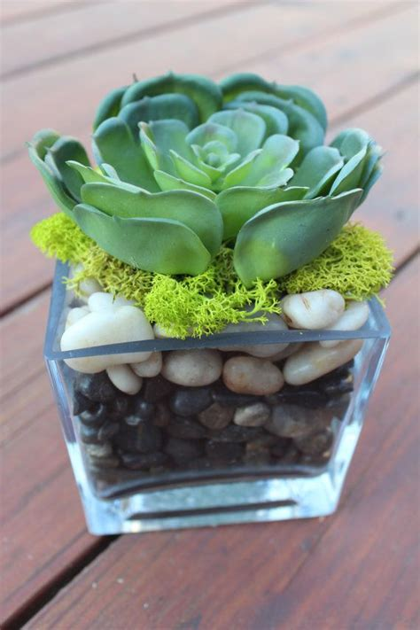 Succulent Vase by Artificial Succulent In A Square Glass Vase Floral