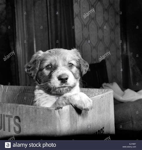 abandoned puppies abandoned robinson crusoe was abandoned in a cardboard box with stock photo