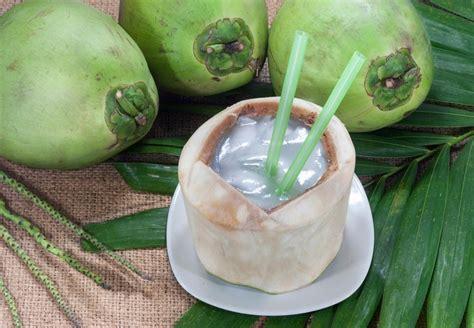 membuat zpt air kelapa manfaat pohon kelapa mulai dari akarnya sai bunganya