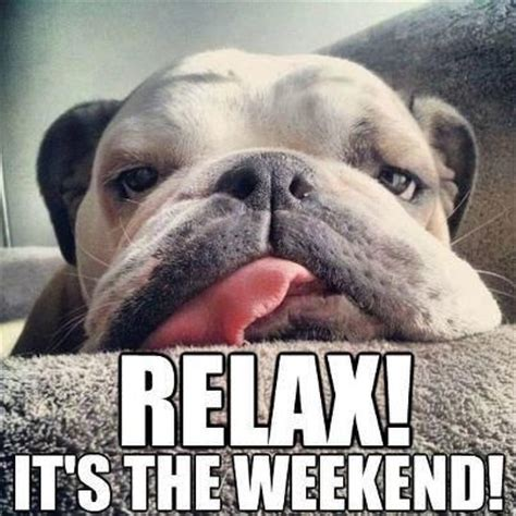 Weekend Dog Meme - dogs pictures weekend quotes quotesgram